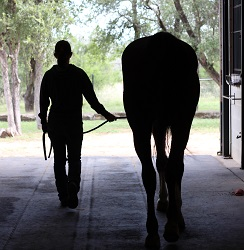 Horsemanship I Course - January 18